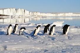 penguins-56097__180
